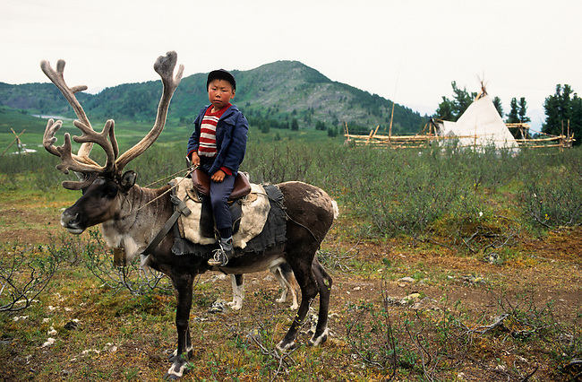 A Tuvan boy rides a reindeer at a herders' camp in Todzhu. Republic of Tuva, Siberia, Russia.