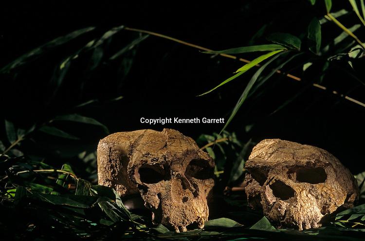 skulls from Yunxian, Zhoukoudian cave, China,