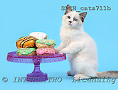 Xavier, ANIMALS, cats, photos, SPCHCATS711B,#A# Katzen, gatos