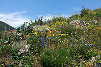 Flowers near Crested Butte