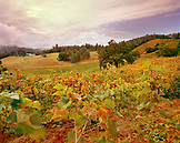 USA, California, Holly's Hill Vineyards against cloudy sky, Gold Country