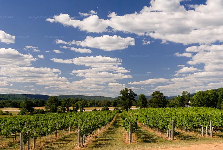 Vineyard sky breaux vineyards rick collier imagery