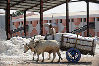 INDIA, Madhya Pradesh, Khargone, Mahima ginning factory, processing of fair trade and organic cotton, farmer supply cotton by bullock cart / INDIEN Madhya Pradesh , Entkernung von fairtrade und Biobaumwolle bei Mahima Fibres Ltd.