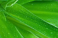 Close up of leaf with water droplets, Palawan, Philippines