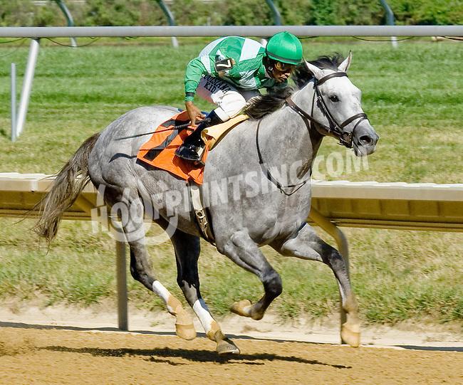 Battle Hard winning at Delaware Park on 7/25/12