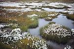 Arctic tundra, Alaska