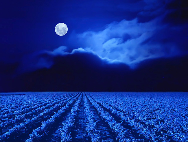 Moon over vineyard.