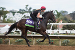 DEL MAR, CA - NOVEMBER 02: Roly Poly, owned by Michael Tabor, Mrs. John Magnier & Derrick Smith and trained by Aidan P. O'Brien, exercises in preparation for Breeders' Cup Mile at Del Mar Thoroughbred Club on November 2, 2017 in Del Mar, California. (Photo by Jamey Price/Eclipse Sportswire/Breeders Cup)