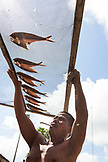 PHILIPPINES, Palawan, Puerto Princesa, Handline fishermen dries his catch in the City Port Area