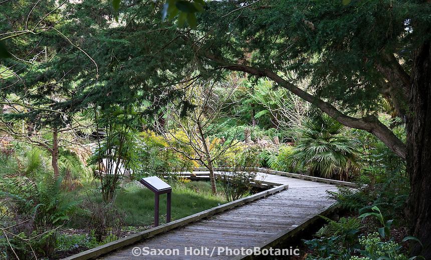 Prehistoric plant boardwalk path in San Francisco Botanical Garden