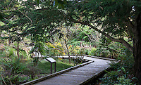 Prehistoric plant boardwalk path in San Francisco Botanical Garden