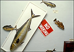 Movie Prop Rental - Ellis Mercantile- display of fish props for rent on LaBrea Ave. in Hollywood, CA