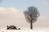 Richmond Park, England. Pile of logs and one solitary, bare, strong,  tree in the winter snow.