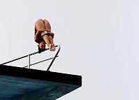 BARRANQUILLA - COLOMBIA, 22-07-2018: Competidora Lisbeth Ramírez de Venezuela , modalidad 10m plataforma.Juegos Centroamericanos y del Caribe Barranquilla 2018. /Competitor Lisbeth Ramirez of Venezuela, 10m platform platform of the Central American and Caribbean Sports Games Barranquilla 2018. Photo: VizzorImage /  Contribuidor