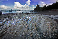 barnacles on rock at Rialto Beach. Olympic National Park, Washington