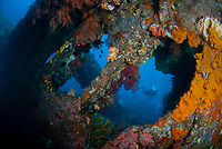 Coral-covered interior of wreck, with diver in background, Liberty Wreck dive site, Tulamben, near Seraya, Bali, Indonesia, Indian Ocean