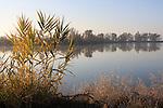 wetland near Woodland