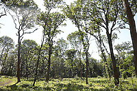 FOREST_LOCATION_90096