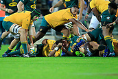9th September 2017, nib Stadium, Perth, Australia; Supersport Rugby Championship, Australia versus South Africa; Adam Coleman of the Australian Wallabies picks up the loose ball during the second half