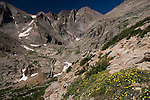 Longs Peak, shrubby cinquefoil, Pentaphylloides floribunda, trail, morning, summer, Rocky Mountain National Park, Rocky Mountains, Colorado, USA