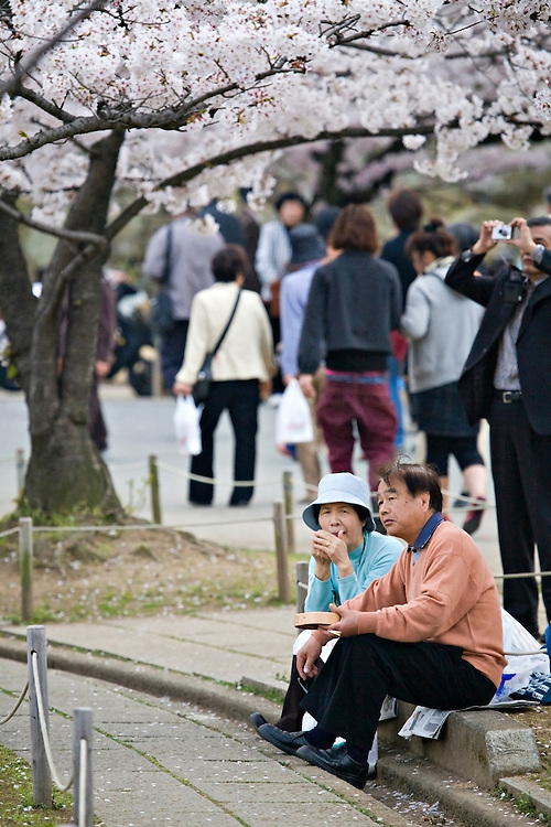 Couple enjoying lunch at Himeji Castle during Sakura Matsuri, the annual Cherry Blossom Festival