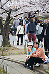 Couple enjoying lunch at Himeji Castle during Sakura Matsuri, the annual Cherry Blossom Festival