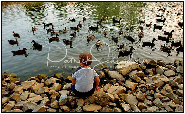A young boy, shown from behind, watches ducks swimming on a pond. Model released image can be used to illustrate many purposes.