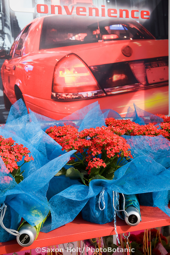 Fides North America marketing display for Kalanchoe flowers using bold photography signage poster of red sports car at California Pack Trials