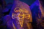 Wasp Petroglyph, Three Rivers Petroglyph Site, New Mexico