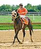 Cherokee Road winning at Delaware Park on 9/2/16