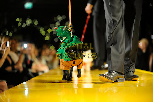 ATMOSPHERE .Harrods 7th Annual Pet-A-Porter Dogwalk Event, Harrods, Knightsbridge, London, England..November 26th, 2009.dog animal pet catwalk runway brown green elf costume.CAP/FIN.©Steve Finn/Capital Pictures.