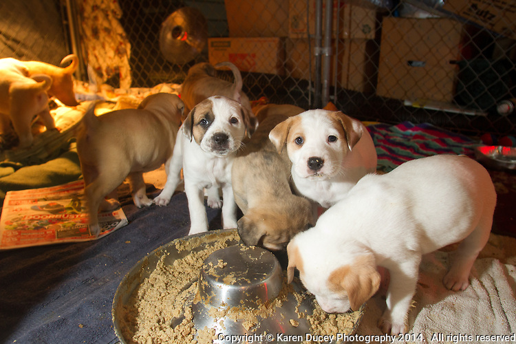 Diana Crimi's rescue puppies