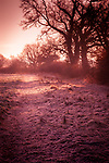 Winter in the countryside setting sun over hedgerows in Suffolk England