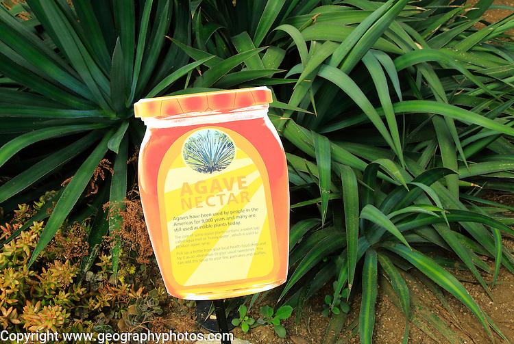 Agave nectar cactus plant information sign label, Princess of Wales conservatory Royal Botanic Gardens, Kew, London, England, UK