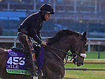 November 1, 2018 : Divisidero, trained by Kelly Rubley, trains for the Breeders' Cup Mile at Churchill Downs on November 1, 2018 in Louisville, KY. Jessica Morgan/ESW/CSM