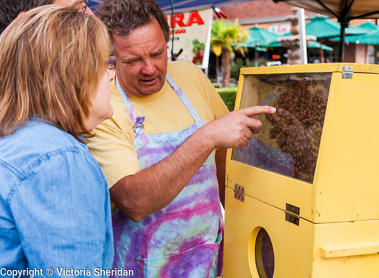 "Sterling Hoggan,of ""Hoggan's Honey"" of Brentwood, points to the bees in the observation beehive to Amy Spero, of Brentwood, at the Brentwood Farmers Market in Saturday, March 30th, 2013 in Brentwood, California.  Photo/Victoria Sheridan"