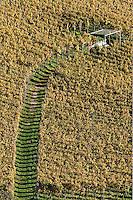 Pathway through vineyard, Interlaken, Switzerland