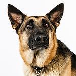 20120813 Animal Humane