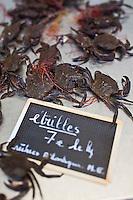 Europe/France/Bretagne/56/Morbihan/Vannes: La Halle aux poissons Place de la Poissonnerie Détail étal: Etrilles