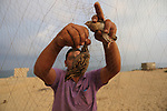 A Palestinian man takes out a quail from a net after catching it on a beach in Khan Younis, in the southern Gaza Strip September 14, 2019. Palestinians erected hundreds of meters of nets along the coastline in the Gaza Strip to hunt migratory birds, mainly quails, which arrive to the coasts of the Mediterranean in the second half of September of each year. Photo by Ashraf Amra