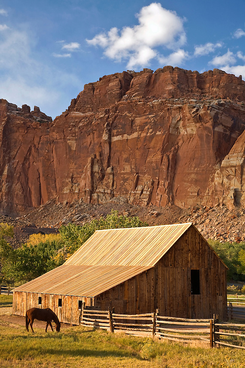 Horse at Gifford Barn in Capital Reef National Park, Utah