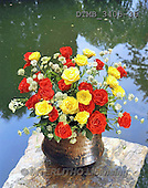 Gerhard, FLOWERS, BLUMEN, FLORES, photos+++++,DTMB3405-36,#F#