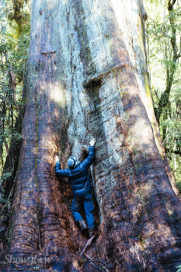 Image Ref: T68<br />