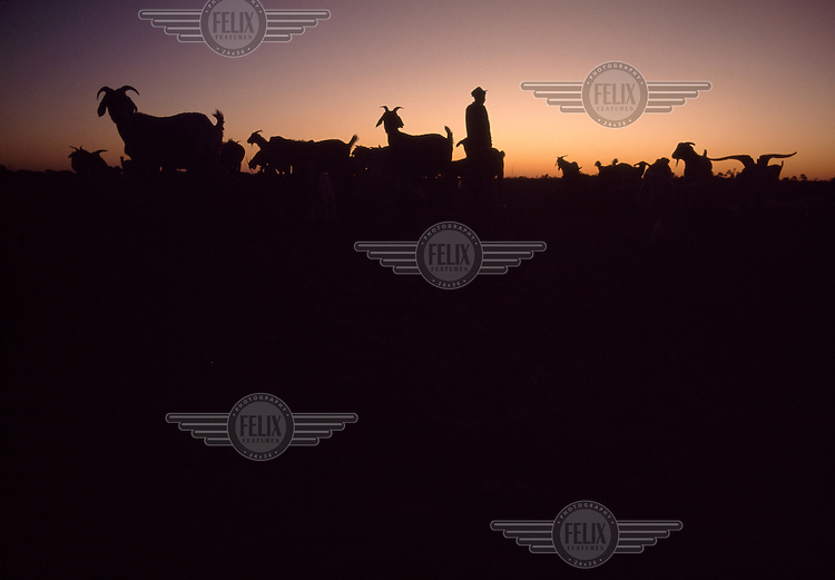 A man herding goats silhouetted against the setting sun in the Xade settlement before the entire San population were removed, between 1997 and 2002, to a new location outside the Central Kalahari Game Reserve.