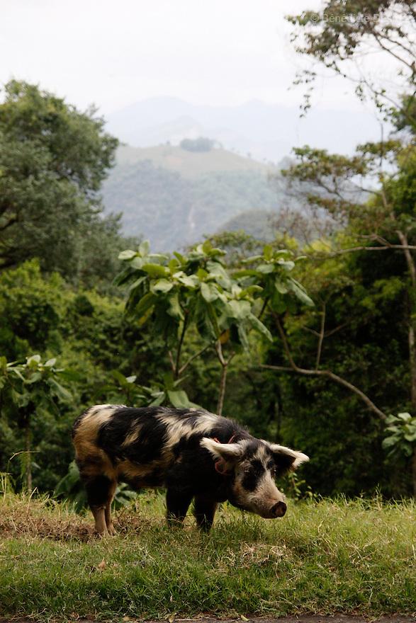 April, 2009 - Mexico - Pig.