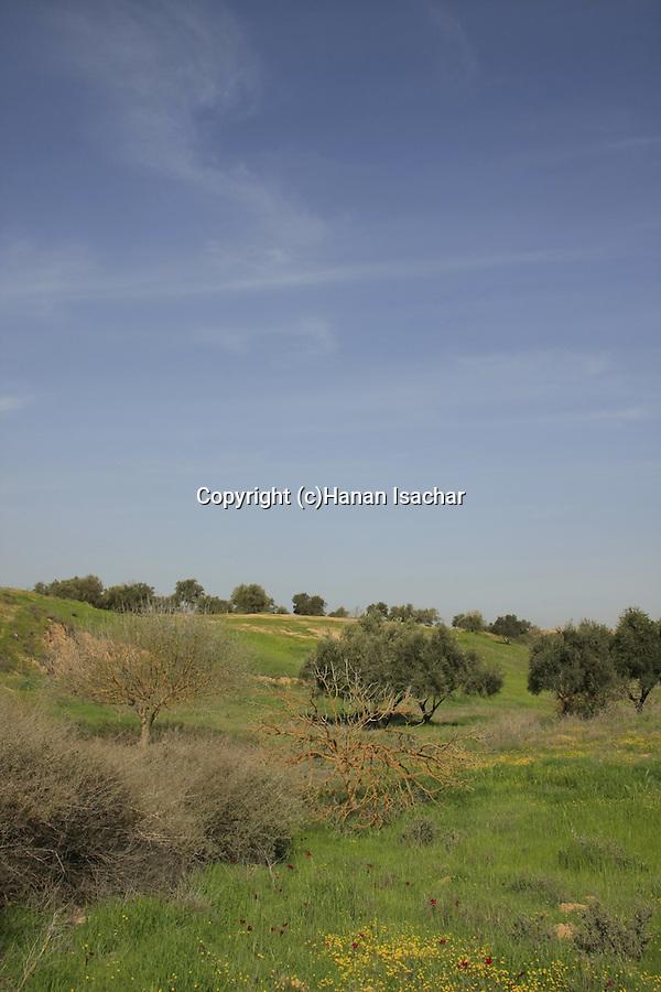 Israel, Besor region in the northern Negev. Springtime at Eshkol National Park