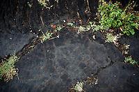 Human Figure Hawaiian Petroglyph, Punalu'u Beach Park, Big Island