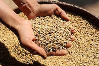 LAOS, province Oudomxay , village Houyta, Khmu woman dries rice in sun, the rice is used to prepare sticky rice as their staple food / LAOS Provinz Oudomxay Dorf Houyta , Ethnie Khmu , Frautrocknet Reis in der Sonne, die lokale Reissorte wird als Klebereis zubereitet und ist Grundnahrungsmittel