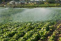 agricoltura, irrigazione