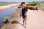 (95/17/28)-Ban Nanath-Vientiane-Laos/Lao PDR - February 07, 1995 -- A man carrying rice seedlings; FNS/SAN, agriculture, rural -- Photo: © HorstWagner.eu